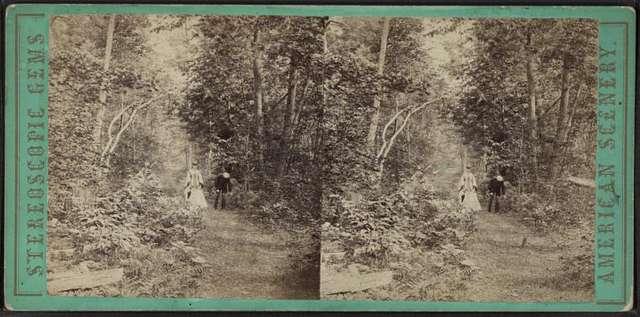 A stroll through the woods at Lake George, N.Y.