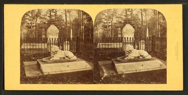 Perkins dog, Mt. Auburn.