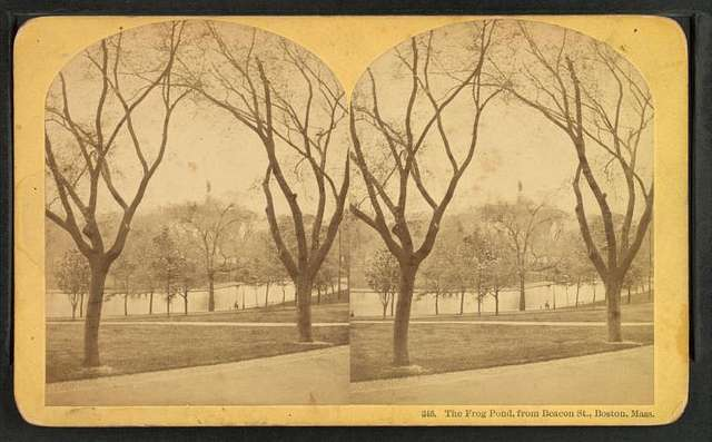 The Frog Pond, from Beacon St., Boston, Mass.