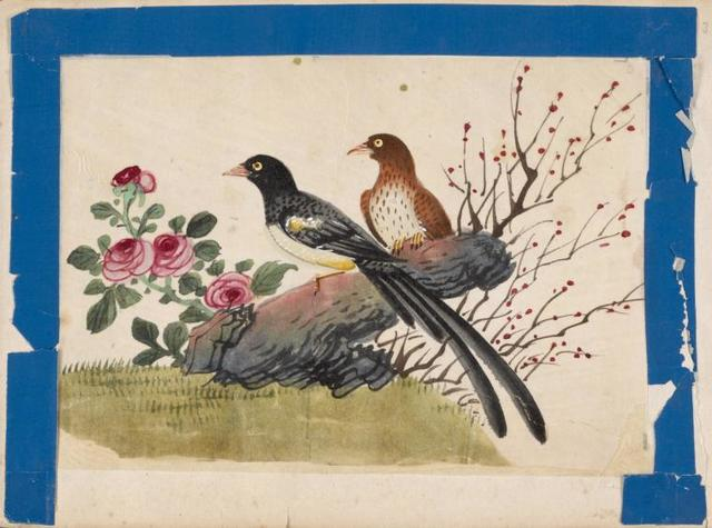 Birds of China. [Black bird and brown bird on stone with branches and berries, flowers.]