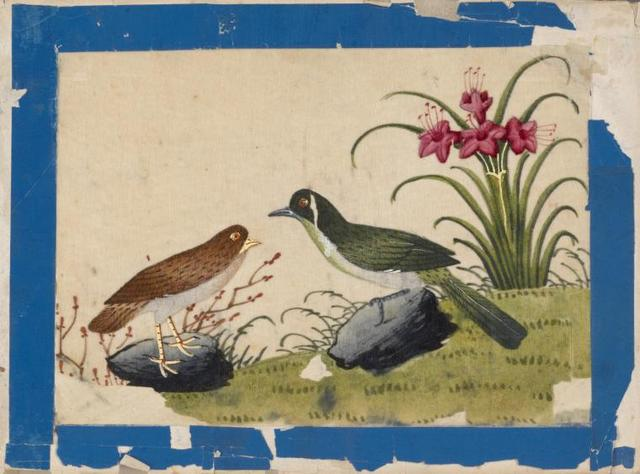 Birds of China. [Brown bird and green bird on stones.]