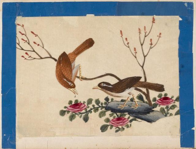 Birds of China. [Brown birds on branch and stone.]
