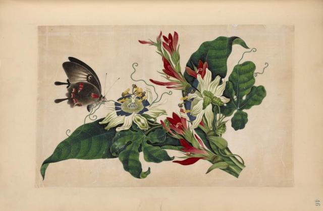 Black and red butterfly with red and white flowers.
