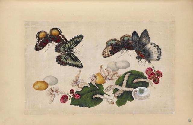 Four butterflies with eggs, larvae, and moths.
