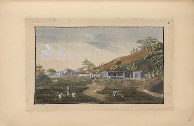 Rural landscape, people watering tea field.
