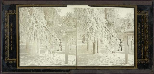 Grove scenery - winter.