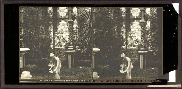 View in a conservatory, Fifth Avenue, New York.