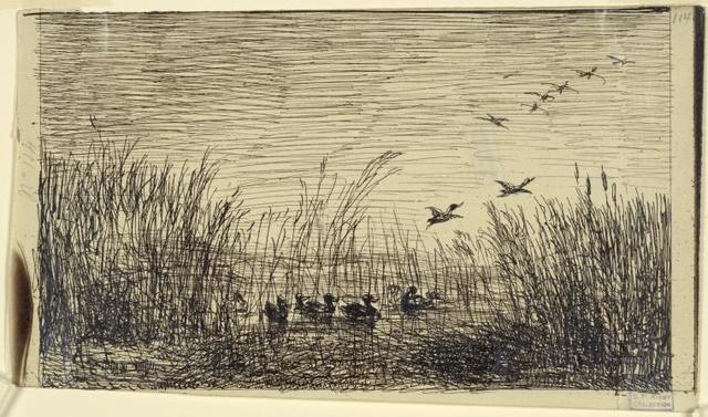 Le marais aux canards