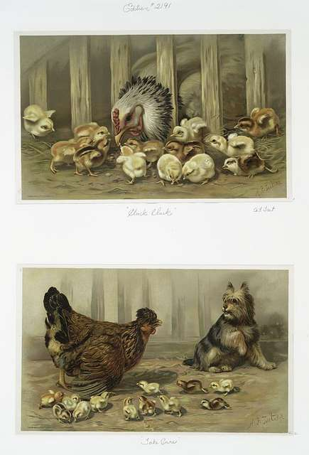 Cluck Cluck, Take Care [prints depicting chickens, baby chicks, and dog].