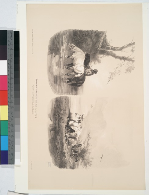 Nouvelles études d'animaux aux deux crayons, no. 9: [Chevaux buvant à la riviàre, vaches et chèvres (2 sujets)].