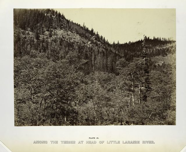 Among the timber at head of Little Laramie River.