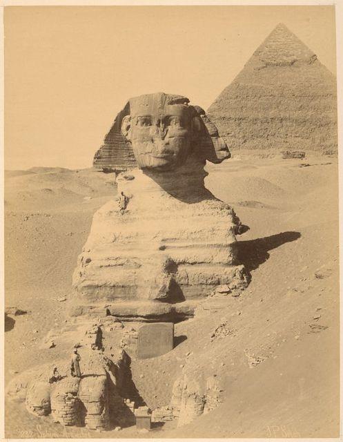 Sphinx Armachis [neg. 232]