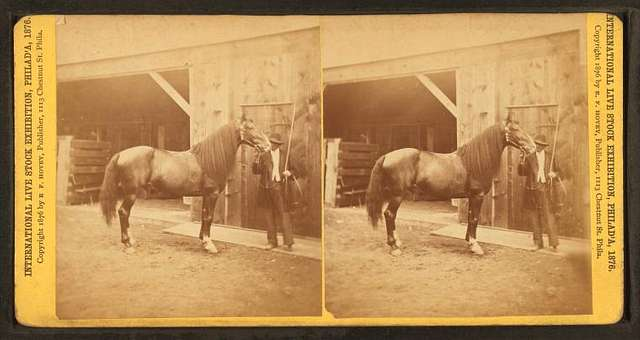 Groom and horse.