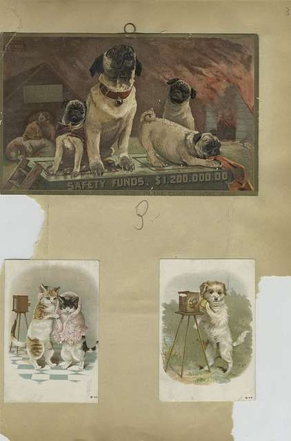 Trade cards depicting dogs, cats, fires, and cameras.