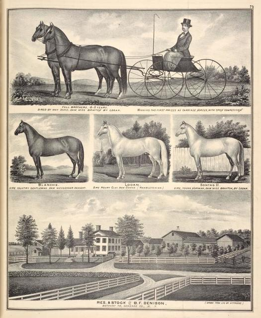 Full brothers, 4-5 years. Sired by May Duke, Dam Miss Brayton by Logan. Winning two first prizes as carriage horses, with open competition. ; Blanche. Sire Country gentelman. Dam messeger descent. ; Logan. Sire Henry Clay. Dam sontag ( Hambletonian.) ; Sontag II. Sire, young Norman, Dam Miss Brayton, by Logan. ; Res. & Stock of B. F. Denison, Bethany TP., Genesee Co., N.Y.