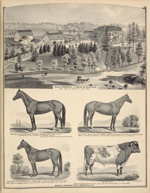 """Res. & Property of Frank B. Redfield, West Main St., Batavia, New York. ; """" Dacia """", Blk. M. Foaled 1868, got by Woodford mambpino (public trial 2: 20 1/4); Dam Dahlia by Pilot Jr. Bred at Woodsburn Farm, Ky. See Wallaces trotting register, Vol. II. Page 170. ; """" Daciana """", Blk. M. Foaled 1873; Got by Harold , son of Rysdyk's Hambletonian ; Dam Dacia above, Bred at Woodburn Farm, KY., See Wallace's trotting register, Vol. II, Page 170. ; """" Exile """", Br. M. Foaled 1873; Got by Herr's Mambring Patchen; Dam Susan Ann by Imp. Glencoe, 1838. Bred by Dr. Herr, Lexington, KY. See Wallaces trotting register Vol. II, Page 198. ; """" Roderick """" 15. 965. Winner of first premium at the N.Y. State Fair 1874 and Western N.Y. Fair 1875. ; Stock, Property of F. B. Redfield."""