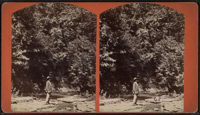 View of a man standing by stream and looking up at trees.