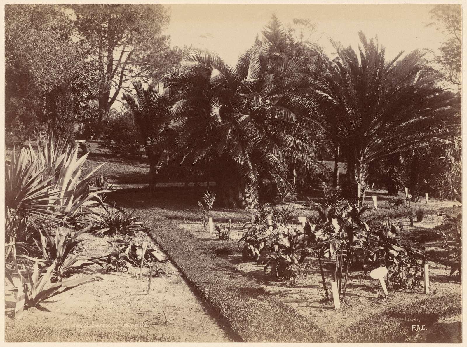 Botanical Gardens. Sydney, N. S. W.