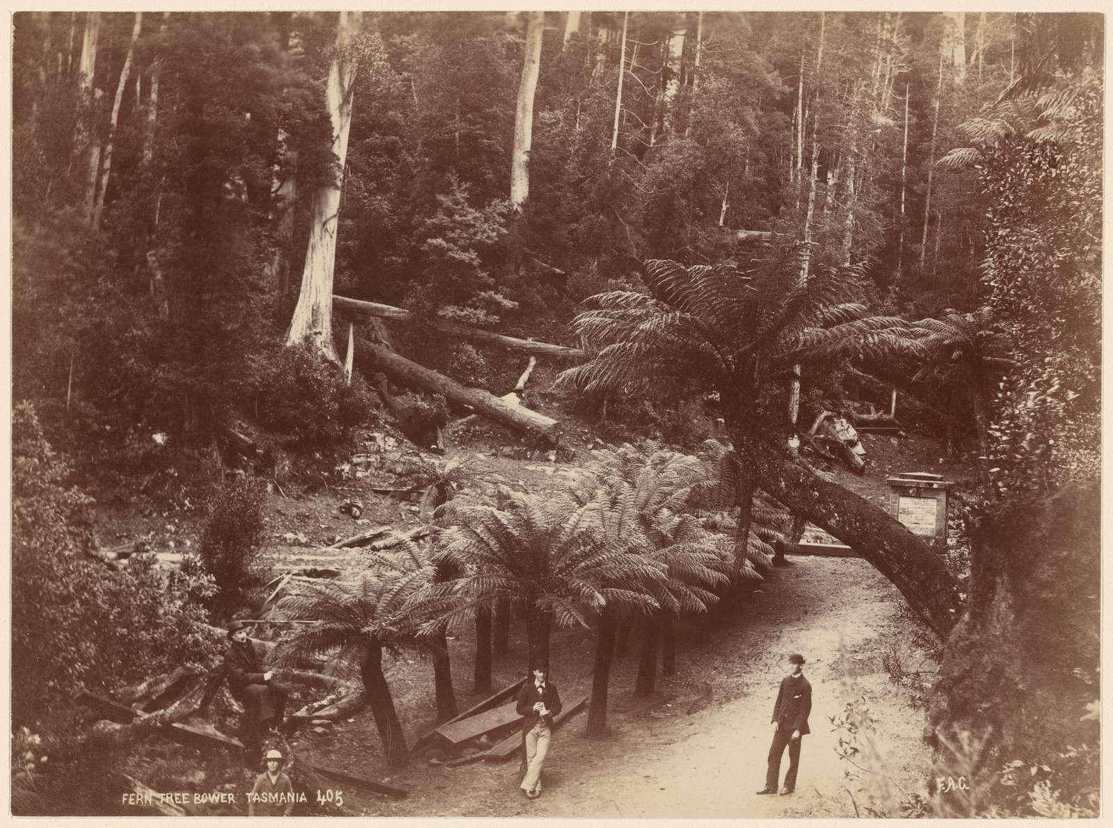 Fern Tree Bower, Tasmania