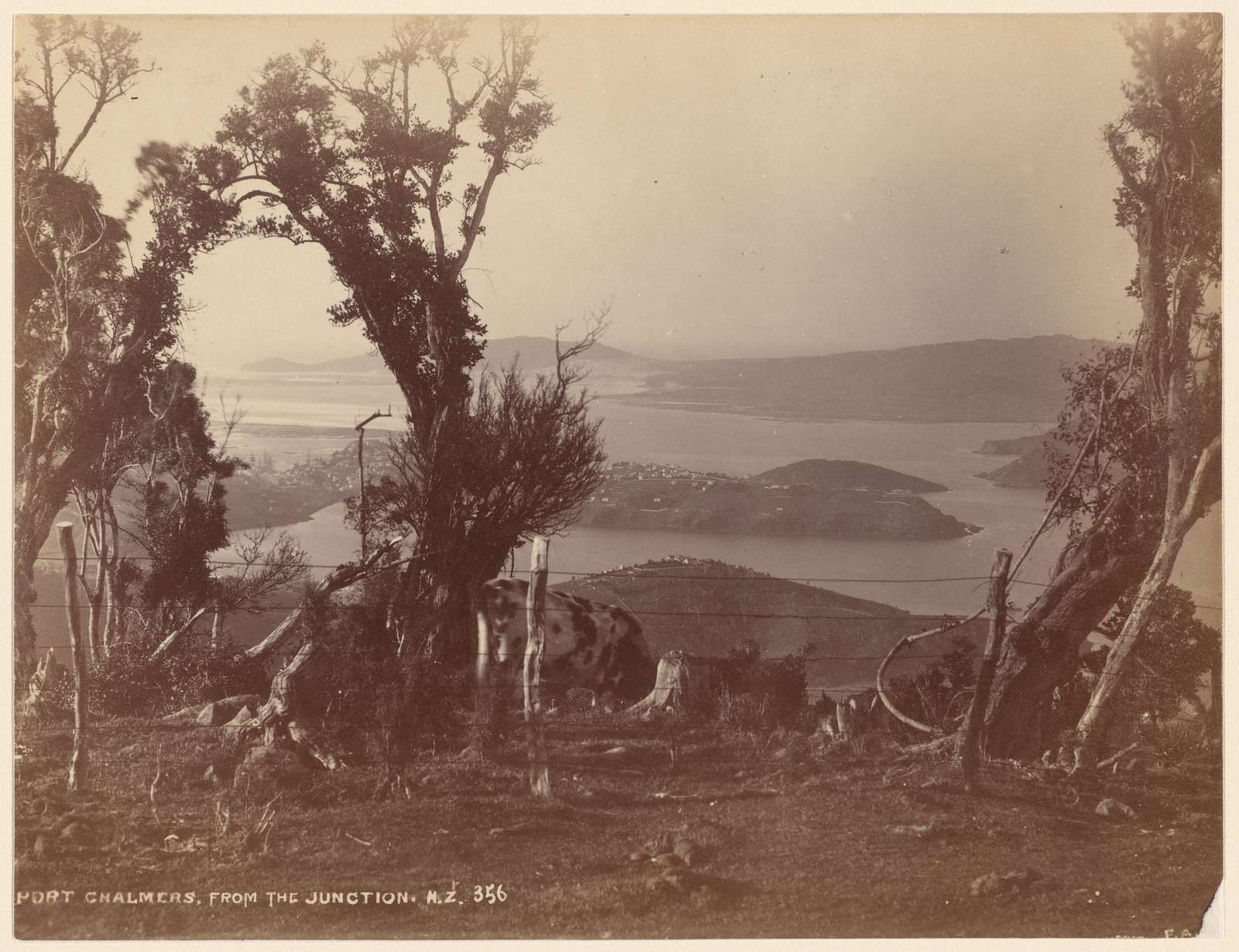 Port Chalmers, from the Junction. N. Z.