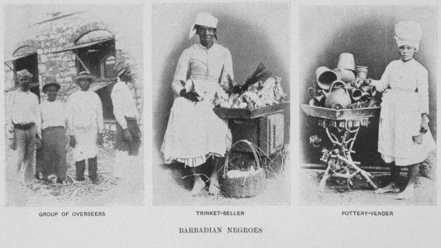 Barbadian Negroes