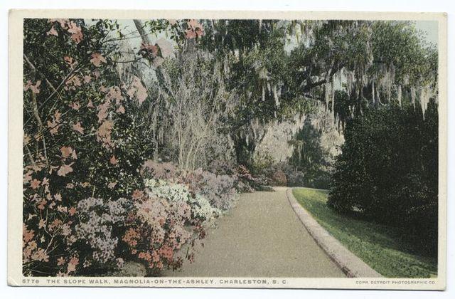Magnolia on Ashley, Slope Walk, Charleston S. C.