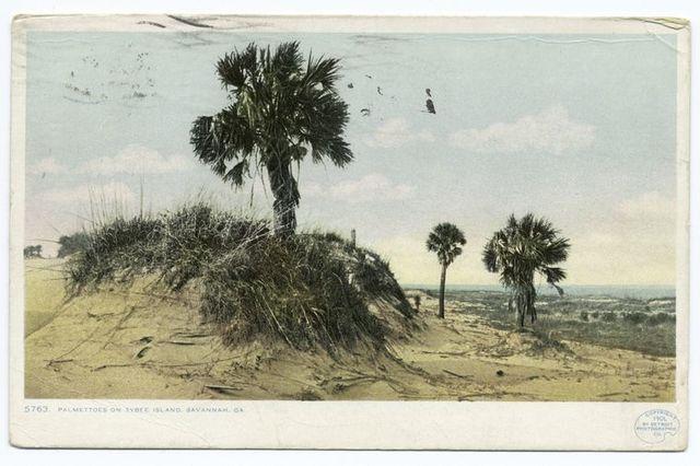 Palmettoes on Tybee Island, Savannah, Ga.