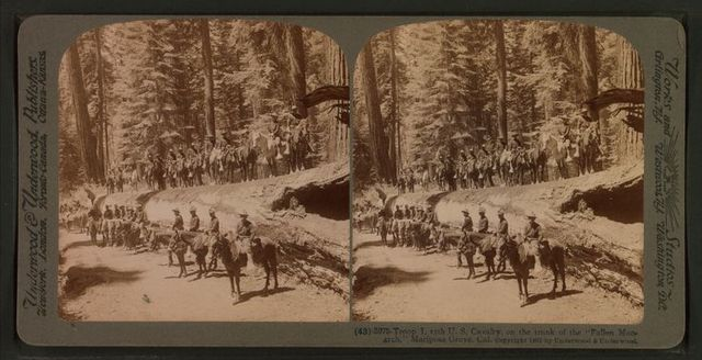 "Troop I, 15th U. S. Calvary, on the trunk of the ""Fallen Monarch,"" Mariposa Grove, Cal."