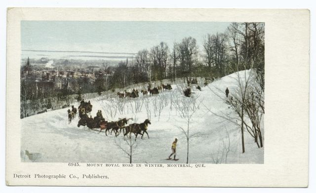 Mt. Royal Road in Winter, Montreal, Que.