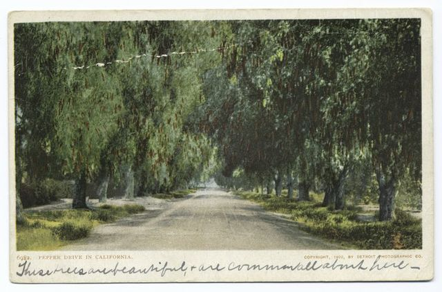 Pepper Drive, Riverside, Calif.
