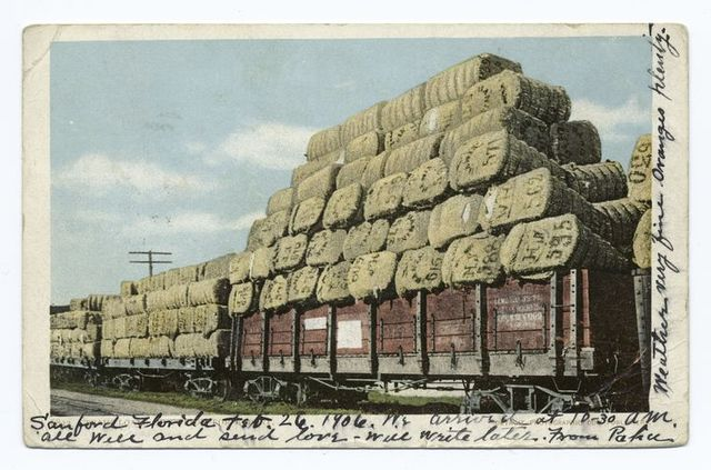 Train Load of Cotton for Export,  South