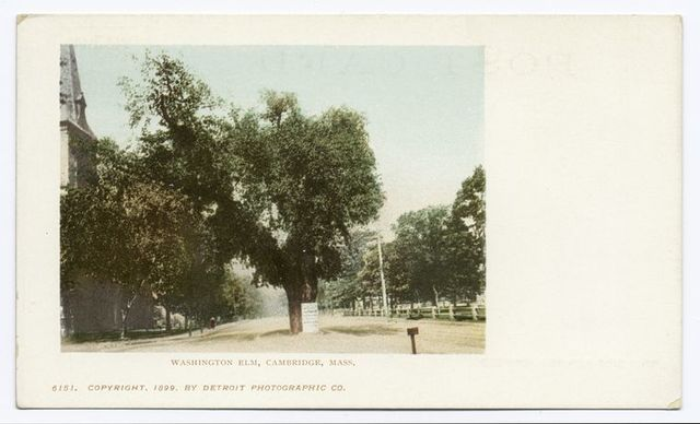 Washington Elm, Cambridge, Mass.