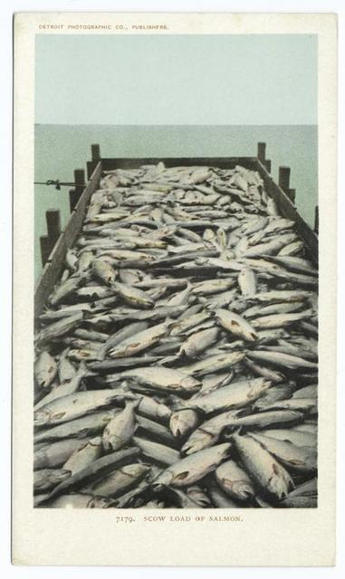 Scow Load of Salmon, Oregon