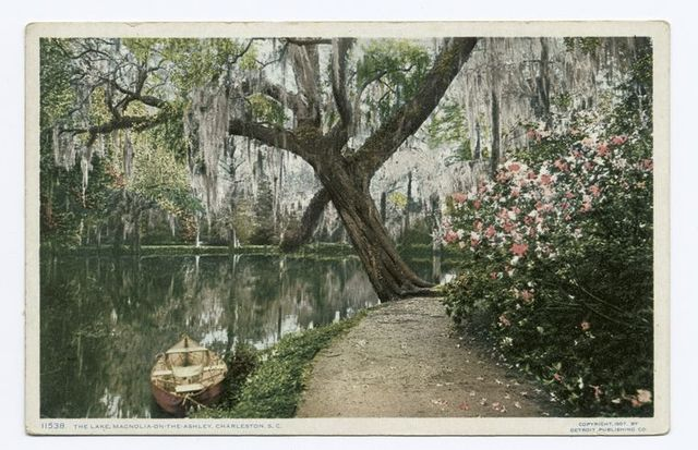 Lake, Magnolia on the Ashley, Charleston, S.C.