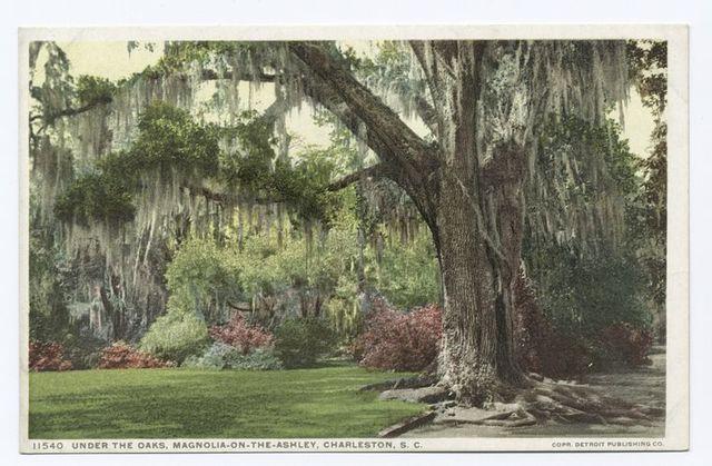 Under the Oaks, Magnolia on the Ashley, Charleston, S.C.