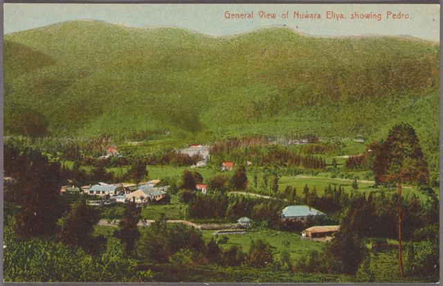 General view of Nuwara Eliya, showing Pedro.