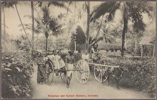 Rickshaw and bullock hackery, Colombo.