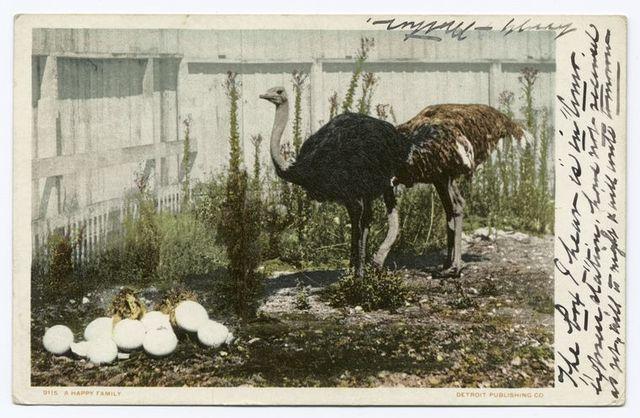 A Happy Family, Cawston Ostrich Farm, So. Pasadena, Calif.