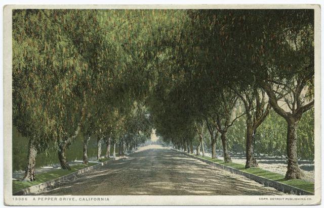 A Pepper Drive, California