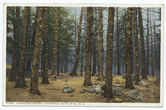 Cathedral Woods, Intervale, White Mountains, N. H.