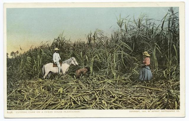 Cutting Cane, Sugar Industry, Cuba