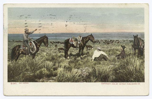 Day Herds