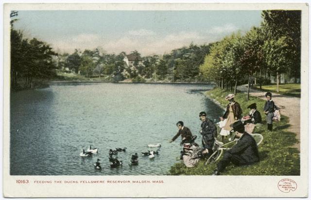 Feeding the Ducks, Fellsmere Reservoir, Malden, Mass.