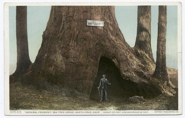 Gen. Fremont, Big Tree Grove, Santa Cruz, Calif.