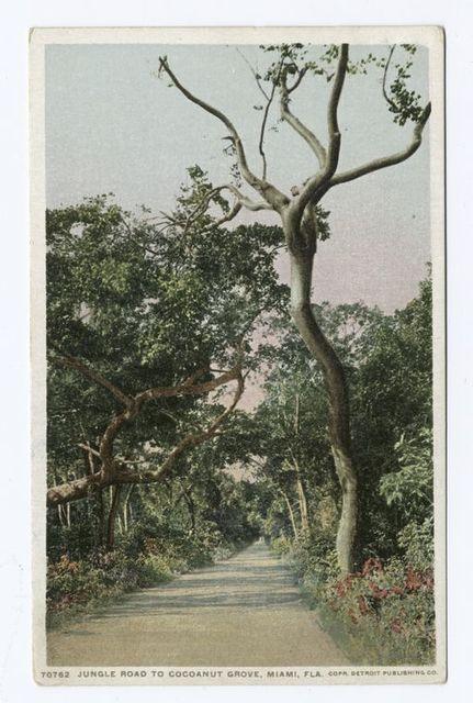 Jungle Road to Coconut Grove, Miami, Fla.