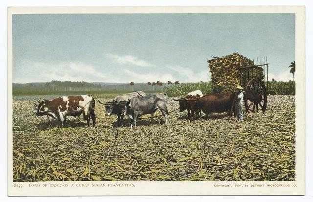 Load of Cane, Sugar Industry, Cuba