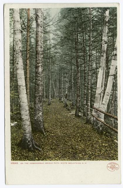 On The Ammonoosuc Bridle Path, White Mountains, N. H.