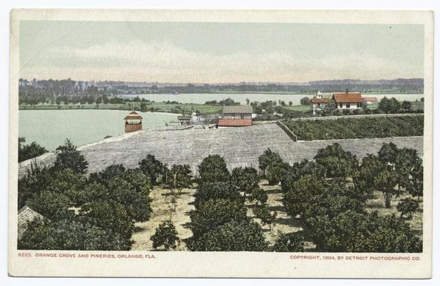 Orange Grove and Pineries, Orlando, Fla.