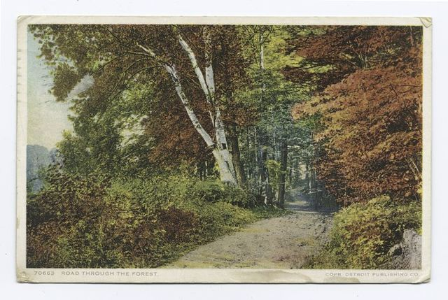 Road through the Forest (Berkshires), Scenic