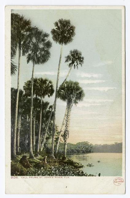 Tall Palms, St. Johns River, Florida